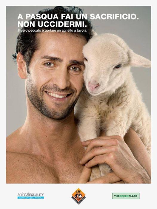 01 Pasqua-agnello