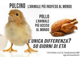 04 pollo